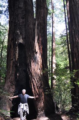 Bill in Tree copy