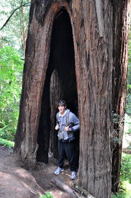 Phil in Tree copy
