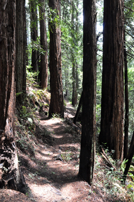 Redwood path copy